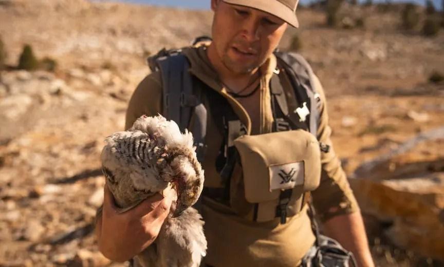 Nevada Snowcock Hunting