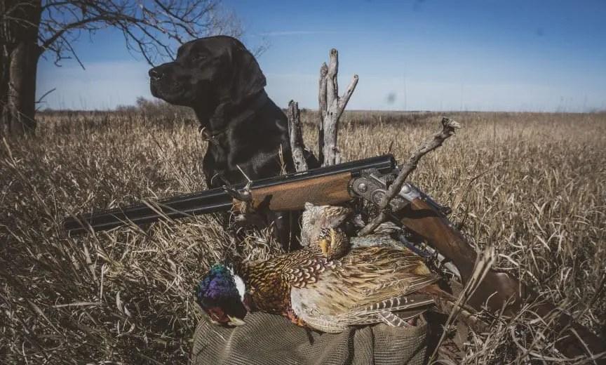 pheasant hunting in kansas