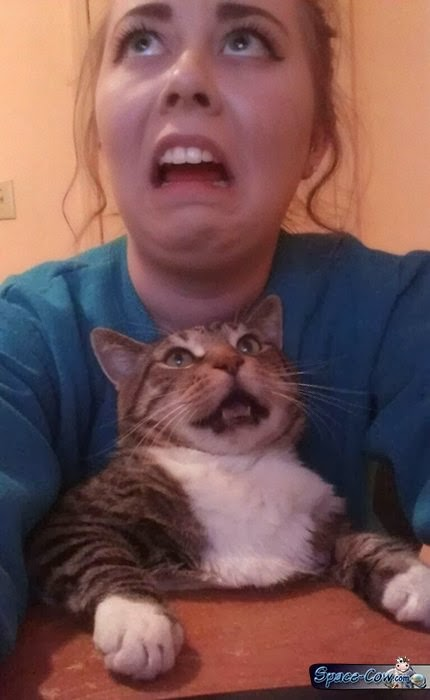 Best selfie with the cat funny animals