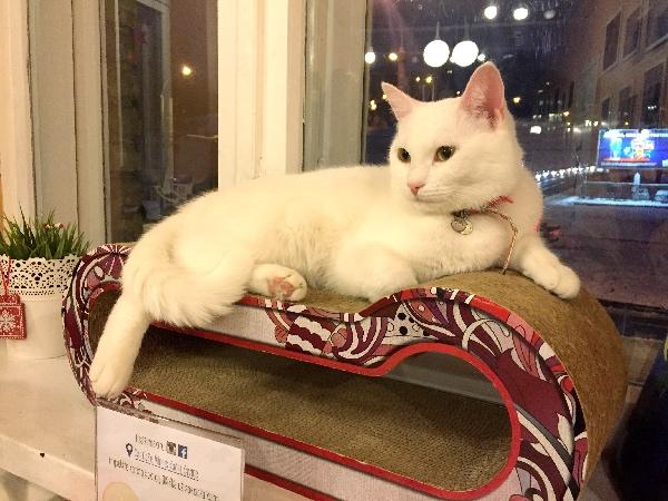 Cat inside Cat Café