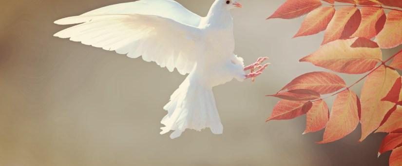 Novembro – Dom de Discernimento de Espírito