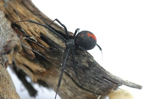 spider on log