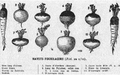 Groepswijs VII – Vergeten groenten