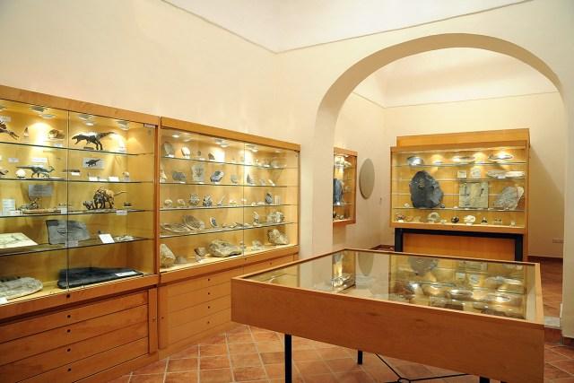 Vetrine-Collezione-Paleontologica