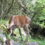 cervo-nell-area-faunistica