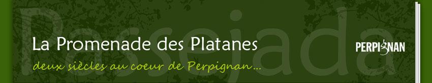 """Résultat de recherche d'images pour """"arbres abattus mairie de Perpignan"""""""
