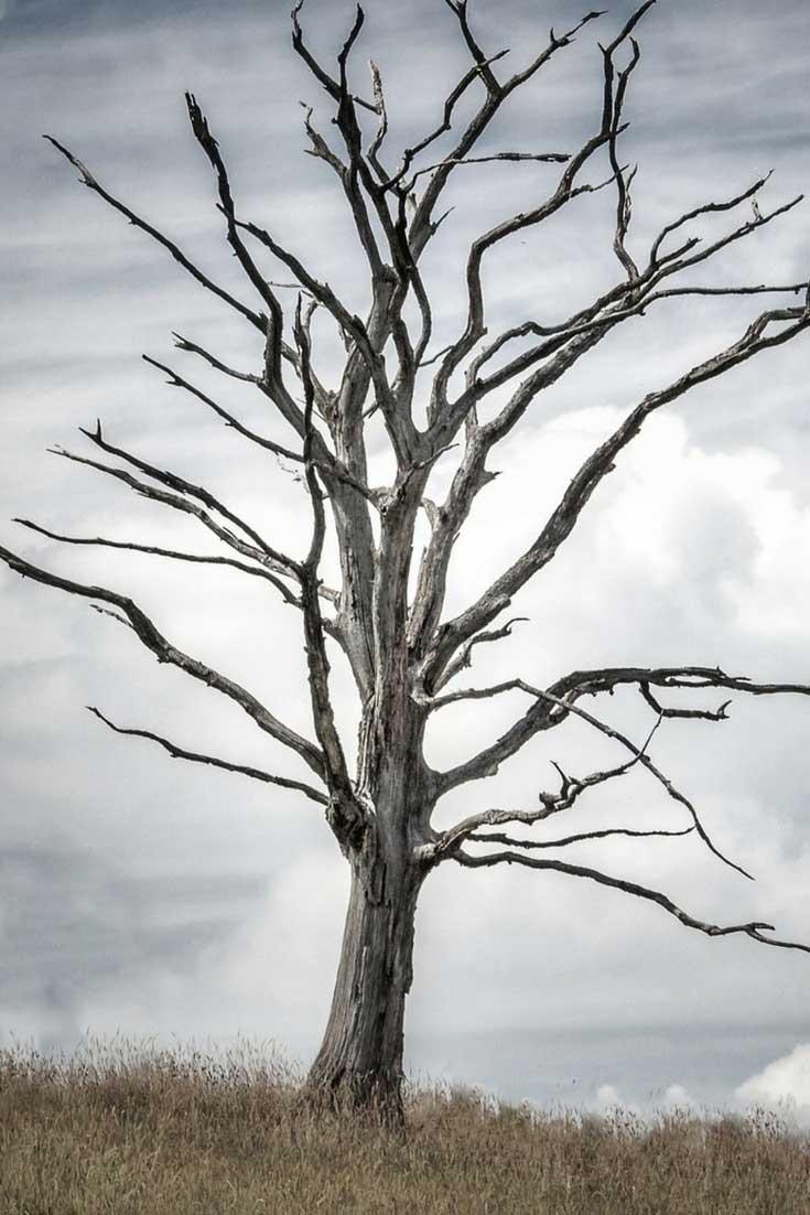 Que faire dun arbre mort au jardin  Solutions et ides  Blog Promesse de fleurs