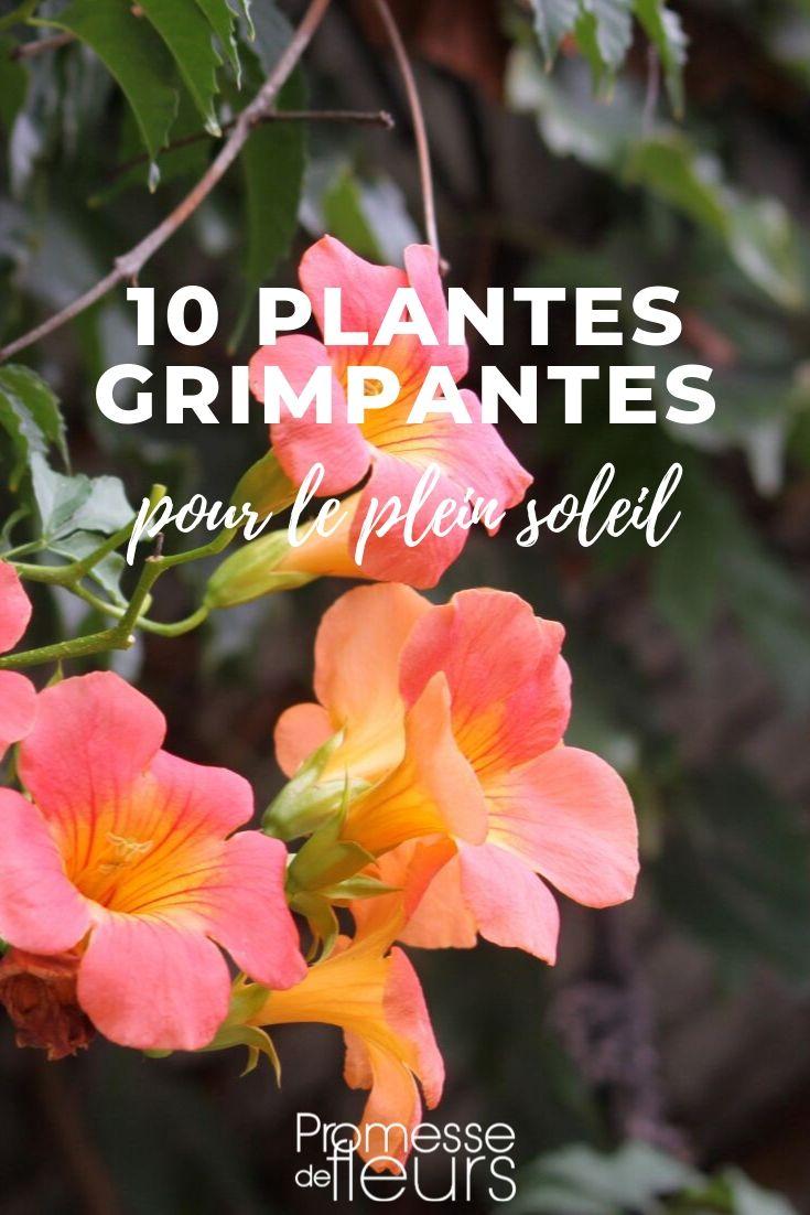 10 plantes grimpantes pour le plein