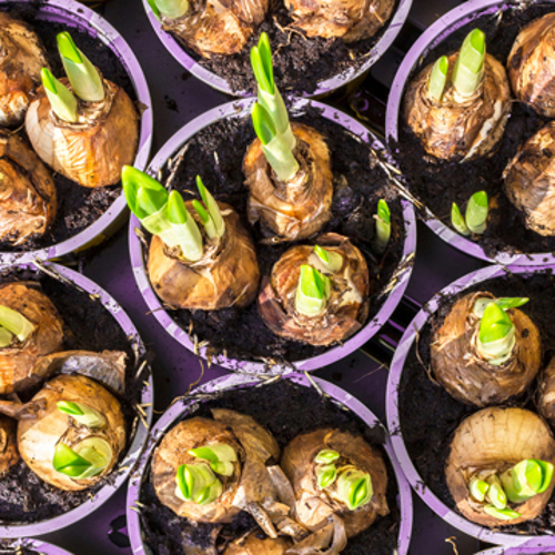 great bulbs for a great look