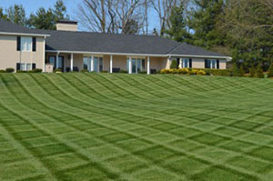 Lawn Maintenance Kingsport, Bristol, Johnson City, TN