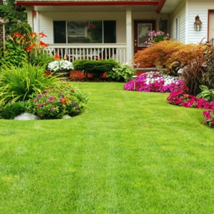 reasons to hire professional landscaper