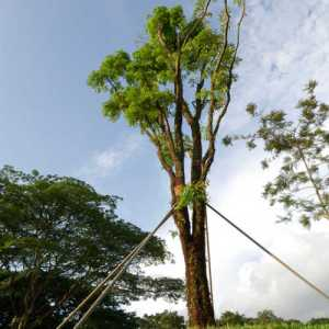 Tree Cable And Bracing Bristol Johnson City
