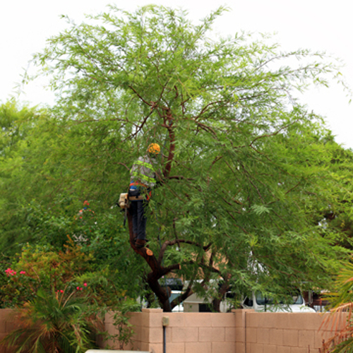 why hire an arborist