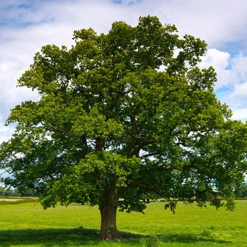 tree emergency
