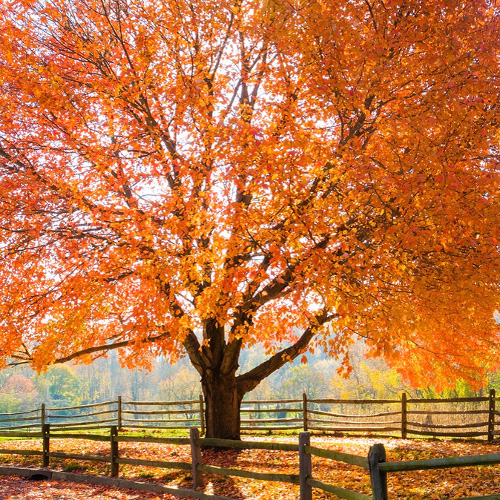 tree care tips in fall