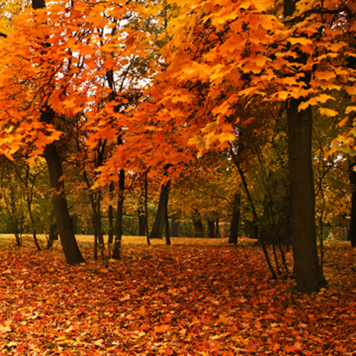 vibrant fall colors are not by chance