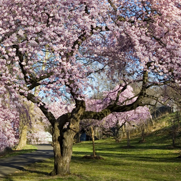 make sure trees are ready for spring