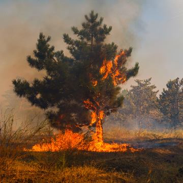 preventing tree fires
