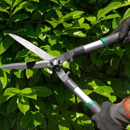 how often to prune trees