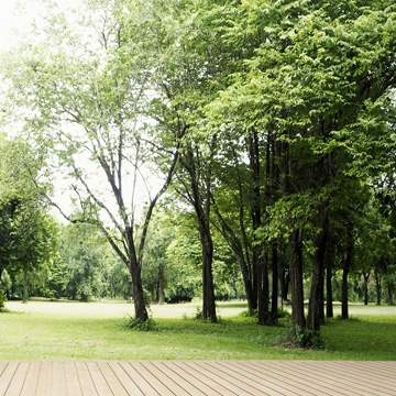 when to hire professional tree service
