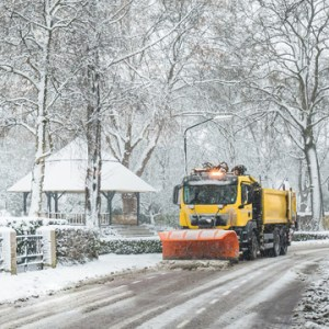 protect trees from salt damage