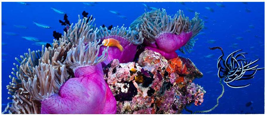 PROMOWORLD DIVING TOUR OPERATOR  Specializzati in viaggi crociere e immersioni subacquee nel