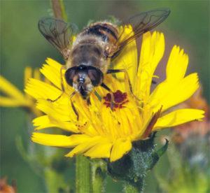 fleur-stage-insecte