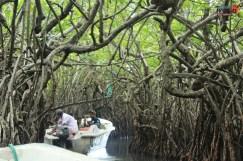 sri lanka tour itinerary - Madu River Boat Ride through Mangroves - View 16