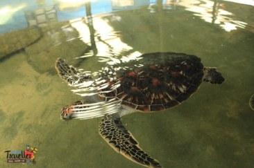 sri lanka tour itinerary - kasgoda Turtle Hatchery View 1