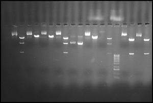 Mitochondrial Mutations