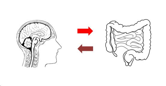 Instestino cerebro