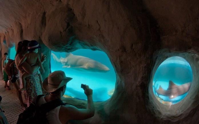 Aquário dos Tubarões - Projeto Tamar - Praia do Forte - Foto: Tamar.Org