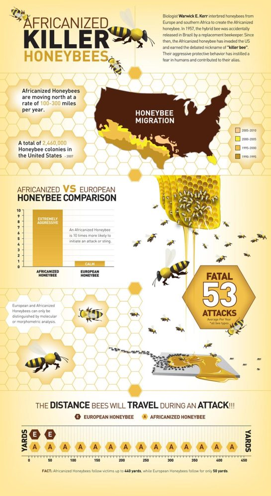 Killer Africanized Honeybee Migration Through the United States (1/3)