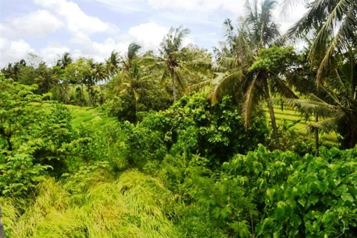 Land for sale in Canggu Bali 800 m2 with Rice fields and river view