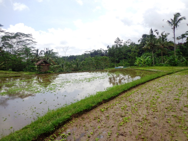 Land for sale in Bali 1,700 m2 in Ubud Tegalalang