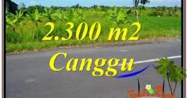 FOR SALE Beautiful 2,300 m2 LAND IN CANGGU TJCG209