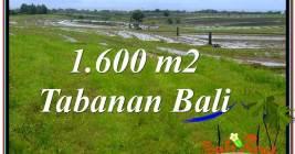 Beautiful LAND IN TABANAN BALI FOR SALE TJTB310