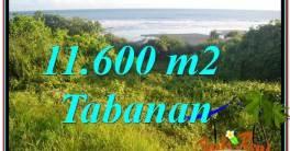 Beautiful 11,600 m2 LAND SALE IN Tabanan Selemadeg TJTB340