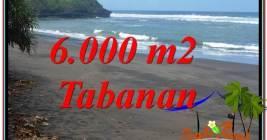 Beautiful PROPERTY 6,000 m2 LAND IN Tabanan Selemadeg BALI FOR SALE TJTB345