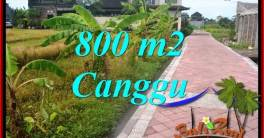 Magnificent 800 m2 LAND IN CANGGU FOR SALE TJCG221