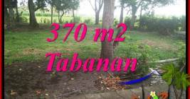 Exotic 370 m2 LAND FOR SALE IN TABANAN SELEMADEG TJTB383