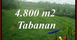 Cheap property LAND SALE IN TABANAN SELEMADEG BALI TJTB387