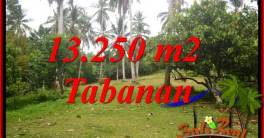 Beautiful Property Tabanan Selemadeg 13,250 m2 Land for sale TJTB403