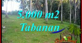 Beautiful Property 5,000 m2 Land sale in Tabanan Selemadeg TJTB408
