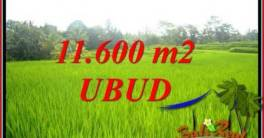 Beautiful Ubud Land for sale TJUB732