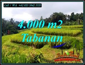 Beautiful 4,000 m2 LAND SALE IN PENEBEL TABANAN BALI TJTB499A