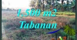 Exotic 1,500 m2 LAND FOR SALE IN SELEMADEG BARAT BALI TJTB497
