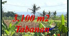 Beautiful LAND FOR SALE IN KERAMBITAN TABANAN TJTB485