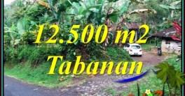 FOR SALE Affordable 12,000 m2 LAND IN SELEMADEG BARAT TJTB475
