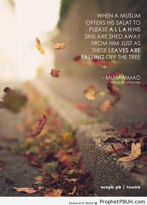 Fall Leaf Iphone Wallpaper Like Falling Leaves Hadith Prophet Pbuh Peace Be Upon